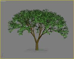 exlevel tutorials how to create a simple tree for growfx