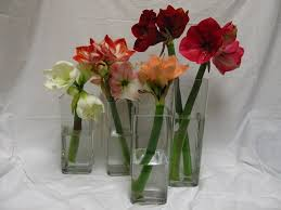 Amaryllis Flowers Amaryllis Asst Amaryllis Flowers And Fillers Flowers By