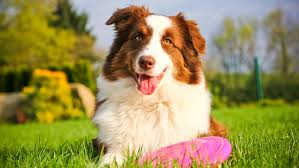 Coo Gadgets by Gadgets And Gizmos Aplenty Petpartners Inc