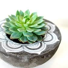 Concrete Planters Best 25 Concrete Planters Ideas Only On Pinterest Concrete Pots