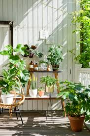 Cascading Indoor Plants by Mit Pflanzen Den Sommer Feiern Plants Balconies And Houseplants