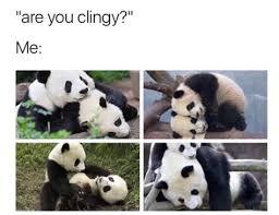 Panda Mascara Meme - th id oip pfkotvdqjzh3iskod0nhaqhafu