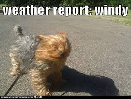 Funny Weather Memes - photos fifteen funniest windy weather memes westword