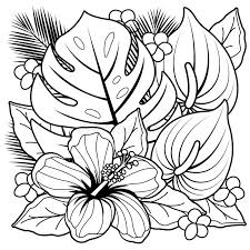 coloring pictures of hibiscus flowers tropical plants and hibiscus flowers coloring book page stock