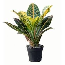 plante d駱olluante chambre plantes dépolluantes chlorophytum dracaena gamm vert