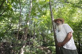 native kansas plants wild yards with native plants provide deep roots help ecosystem