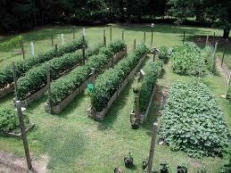 home vegetable garden plans vegetable garden design ideas