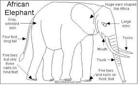 wild animals african elephants interesting facts kids