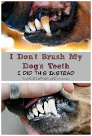 Best Way To Whiten Teeth At Home I Don U0027t Brush My Dog U0027s Teeth I Did This Instead