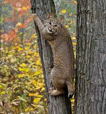 Arkansas wildlife images 100 best arkansas wildlife images arkansas wild jpg