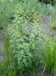 plants native to alabama native plant index a alabama wilflowers pinterest plants and