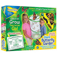Backyard Zip Line Kits For Sale Amazon Com Insect Lore Butterfly Growing Kit Toy Includes