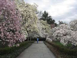 magnolia plaza brooklyn botanic garden