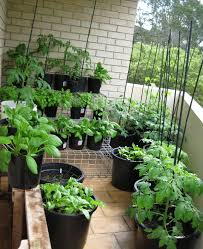 winsome balcony vegetable garden ideas india modern patio