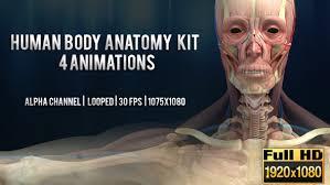 Anatomy Channel 3d Human Body Anatomy Kit 4 Animations Man By Rtahira Videohive