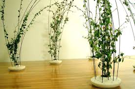 indoor vine plant secrets of growing indoor climbing plants
