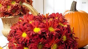 fall pumpkin wallpaper red chrysanthemum and a pumpkin walldevil