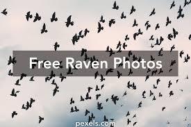 halloween raven background black and white free stock photos of raven pexels