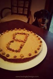 make birthday cake dog birthday cake recipe a special treat for your dog s big day