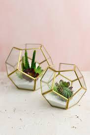 glass terrarium display box 5 5