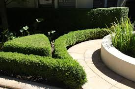 landscaping northern beaches blog