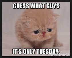 Tuesday Memes Funny - funny tuesday morning memes the random vibez
