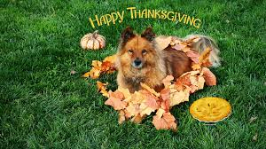thanksgiving screensavers wallpaper hd