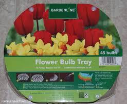 from aldi my garden pinterest bulbs flower and perennials