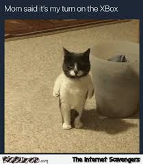 Turn On Memes - mom says it s my turn on the x box funny cat meme pmslweb
