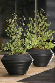 108 best pots and planters images on pinterest plants gardening