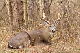When Do Deer Shed Their Antlers by 10 Whitetail Deer Facts Most Hunters Don U0027t Know