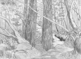drawn forest pencil drawing pencil and in color drawn forest