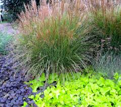 ornamental grass and sweet potato vine makers by