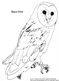 barn owl coloring pages getcoloringpages com