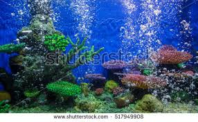 aquarium fish stock images royalty free images vectors