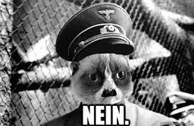 Nein Meme - nein grumpy hitler cat quickmeme