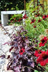 nurseries in atlanta homewood nursery 13 best roser klematis og andre klatreplanter images on pinterest