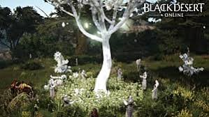Tree Event Black Desert What To Do With The Golden Dagger And Other