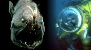 marine life ocean today