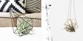 Japanese House Plants New Ways To House Air Plants Cool Hunting