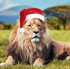 imagenes de leones salvajes gratis pin de marta haklik en csak úgy pinterest