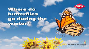 where do butterflies go during the winter