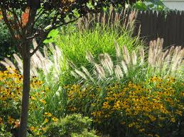 fresh landscaping with grasses and flowers 9252