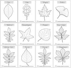 coloring pages of leaf shapes leaf coloring pages leaves learning and montessori