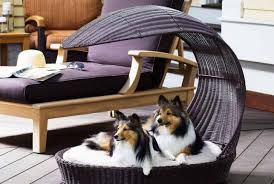 Bunk Bed For Dogs Sofa Delightful Orthopedic Sofa Dog Bed Delicate Pet Sofa Bed