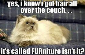 Carpet Cleaning Meme - carpet cleaning steam carpet cleaning