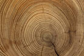 tree rings pictures images Herbivores 39 nibbles affect climate tales that tree rings tell jpg