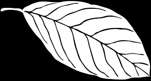 free printable leaf coloring pages for kids 11 pics how to draw