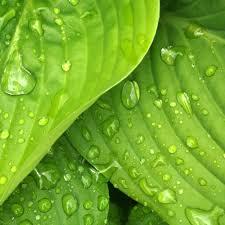 green pantone colour of the year 2017 lindsay kirkwood
