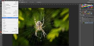 spider web transparent background creating web graphics with adobe photoshop
